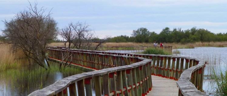 También se puede optar por visitar el Parque Nacional de las Tablas de Daimiel