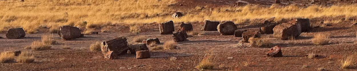 Guía de turismo con información y fotos para visitar Petrified Forest o Bosque Petrificado de Arizona