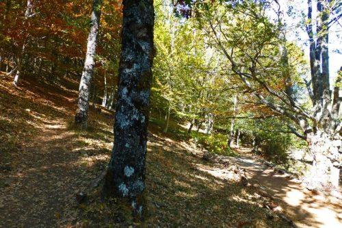 Punto en el que se bifurcan las sendas, una sigue junto al río y la otra asciende por la ladera