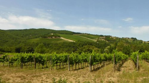 Viñedos de la Toscana, uno de los principales impulsores de la economía de la región