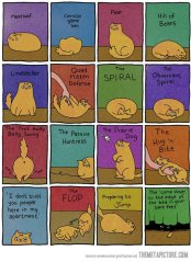 Funny Cat Body Language