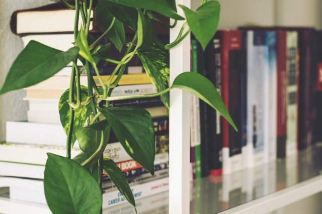 A green vine resting on a white bookshelf that is filled with books.