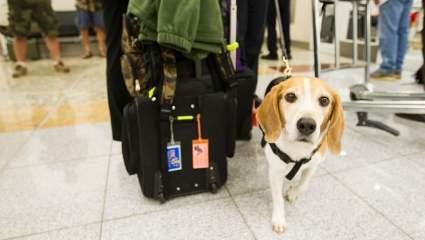 Animal de estimação sofre extravio temporário após atraso de voo e passageira deverá ser indenizada