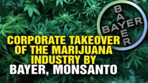 GMO and the Cannabis Industry