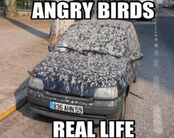 Gross and unavoidable, birds love to target cars, especially when they're shiny.