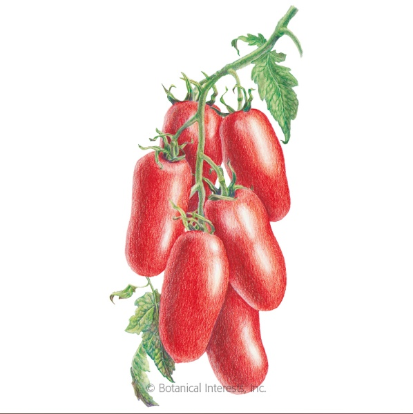 San Marzano Tomato Artwork, Courtesy of Botanical Interests