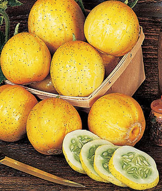 Lemon Cucumbers, Photo Courtesy of Burpee