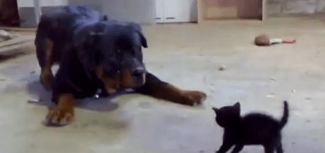 2012-05-10 18-36-12_Brave Kitten Stands Up to Dog - YouTube