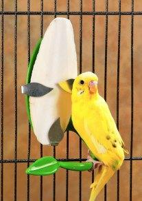Does My Bird Really Need A Cuttlebone 2