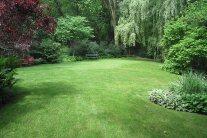 Top 10 Lawn Grass Types