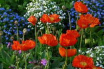 How to Create a Wildflower Garden