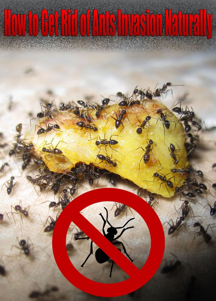 How To Get Rid Of Ants Naturally In Garden