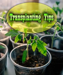 Transplanting Tips for a Successful Garden