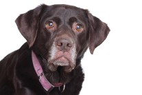 How to Help a Shy, Fearful Dog