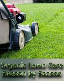 Organic Lawn Care: Season by Season