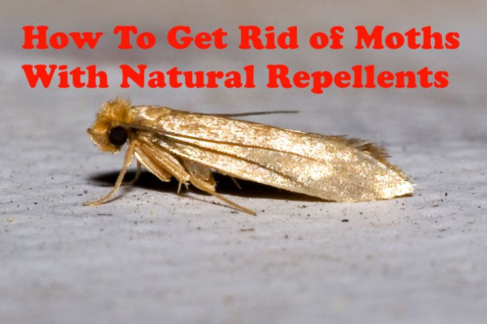 How To Get Rid of Moths With Natural Repellents
