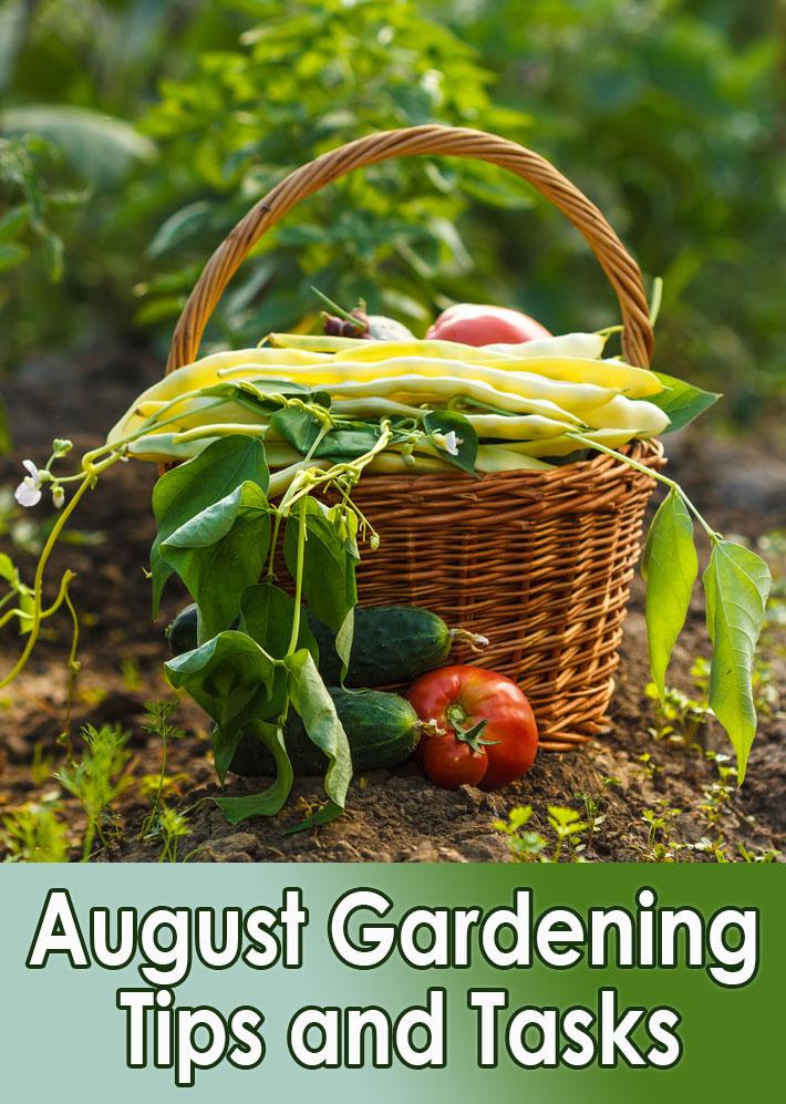 Garden Almanac – August Gardening Tips and Tasks