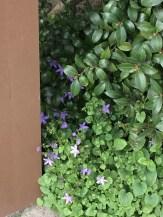 Ultraviolet weeds