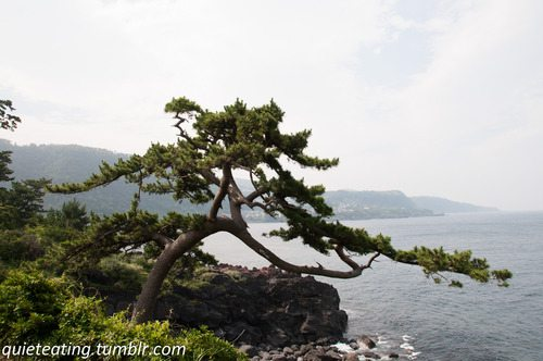 Ito – a visit to the seaside