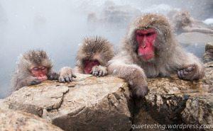 Monkey business – part 1