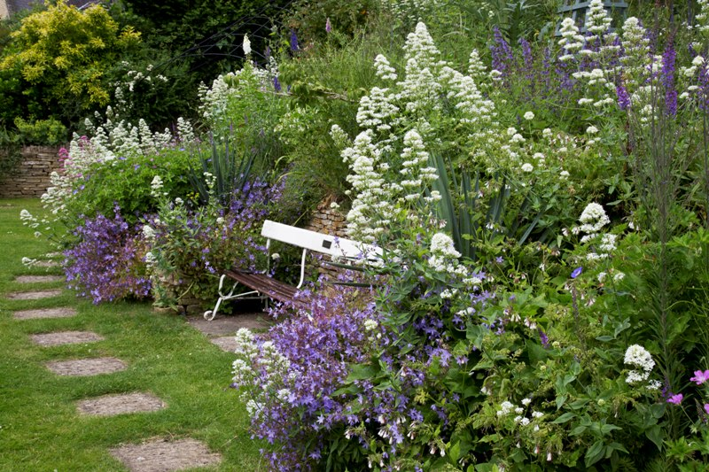 Valeriana Officinalis And Campanula Poscharskyana Fill The Borders With A Bench That Originated In The Mound Stand At Lord's Cricket Ground.  Mill Dene Garden, Gloucestershire.  June.
