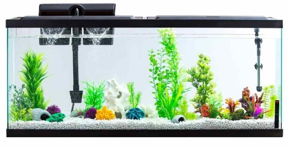 Buy A Quieter Aquarium Filter