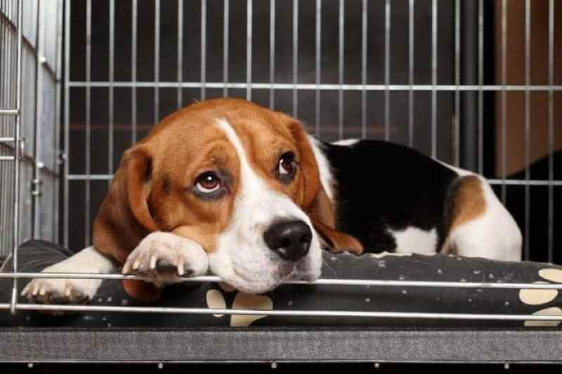 Importance of Soundproofing a Dog Crate