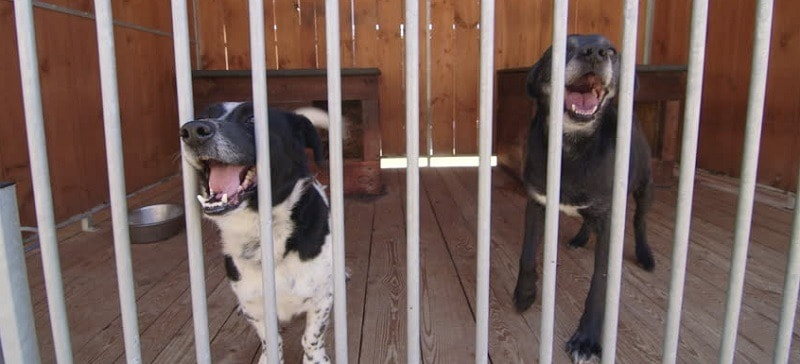 Stop Dog Barking In Crate