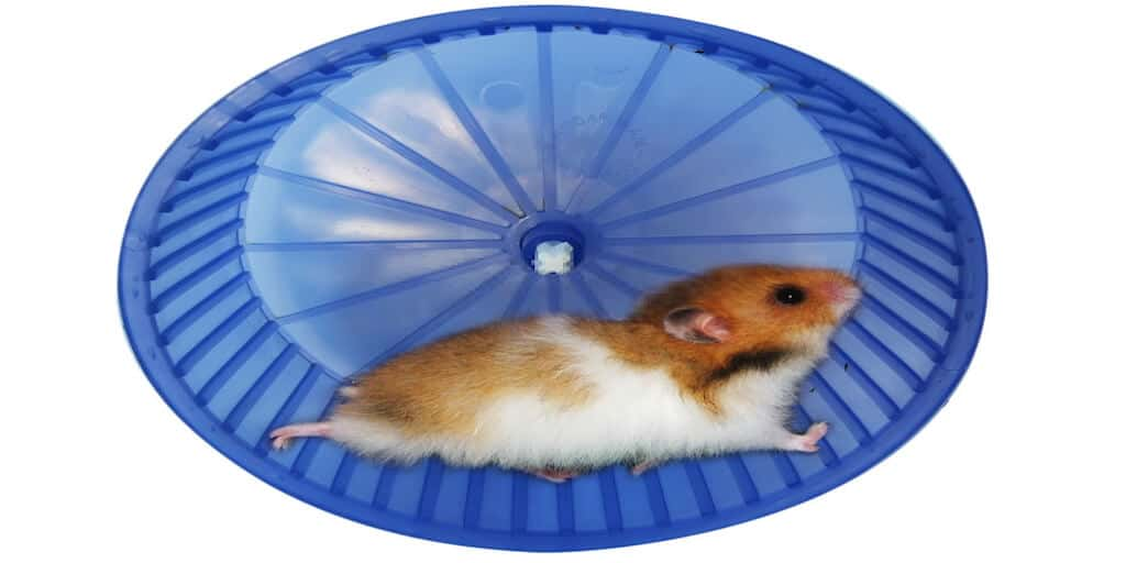 How To Make A Hamster Wheel Quiet