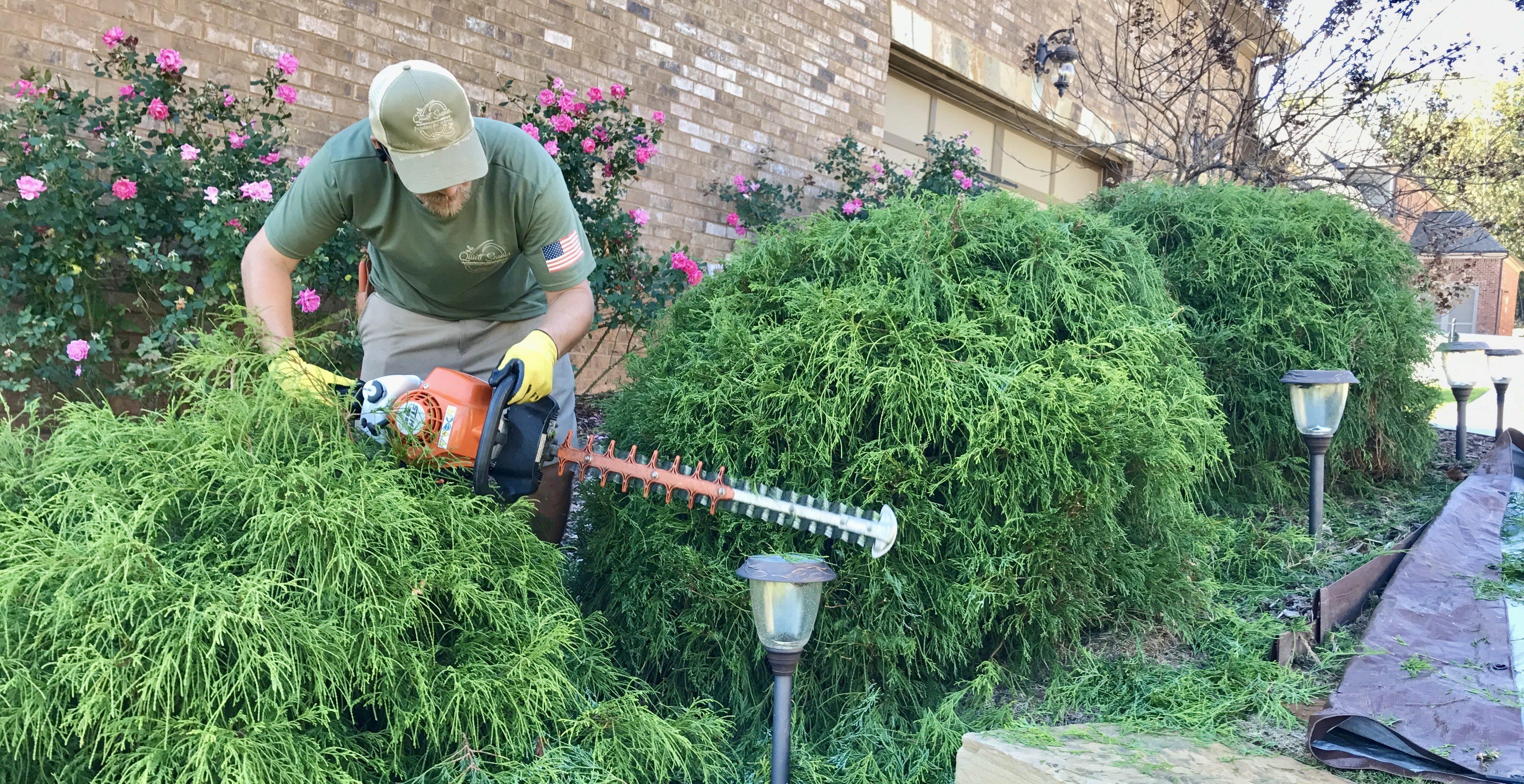 Pruning Bushes Winder, Ga