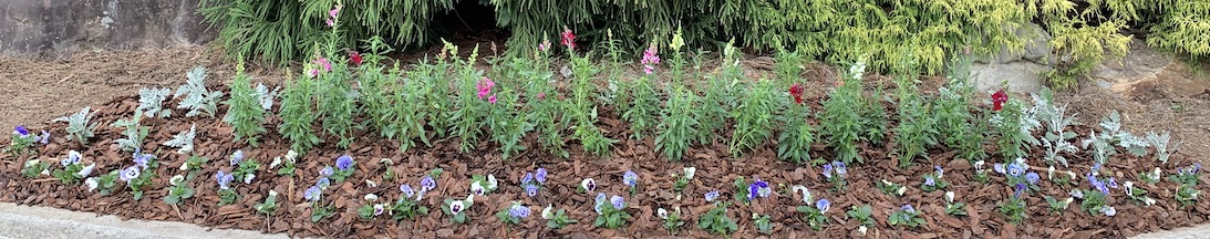 Quiett Scapes Seasonal Flower installation Winder, Ga / Hoschton, Ga / Braselton, Ga / Flowery Branch, Ga / Dacula, Ga / Buford, Ga / Auburn, Ga