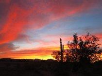 Arizona Desert Days – January 2018