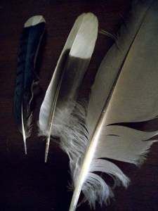 Blue Jay, Dove, and Egret feathers