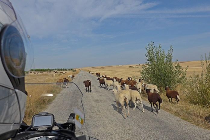 Entre Pereruela e a cidade de Zamora. Espanha