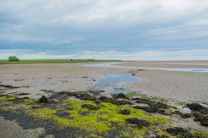 Lindisfarne Nature Reserve