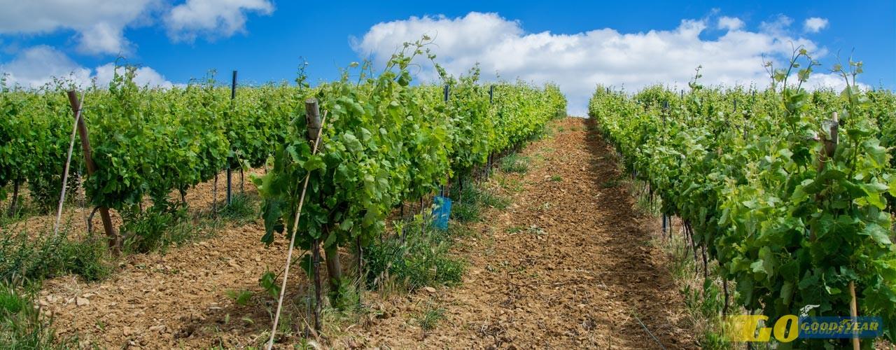 Um tour pelos melhores Vinhos de Lisboa de 2017