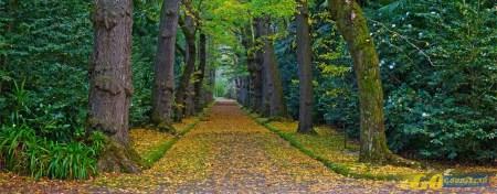 Cinco passeios de Outono para apreciar a natureza