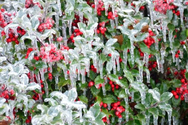 ice-berries-232779_1920