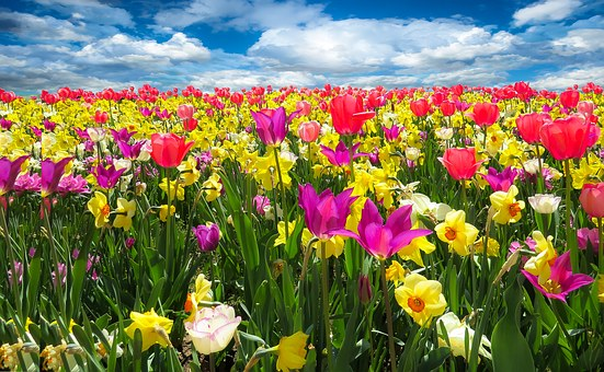 spring-awakening-1197602__340