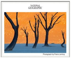Frans Lanting: Namibia Trees Photograph