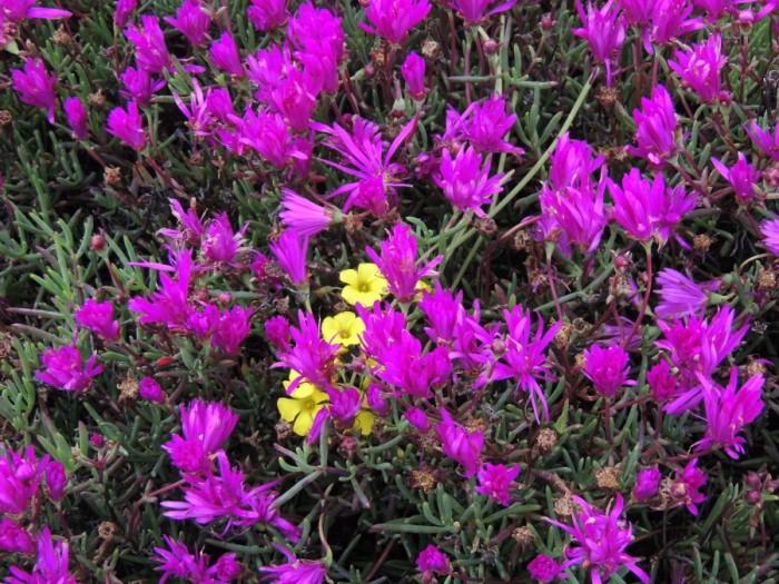Monterey - Spring Flowers