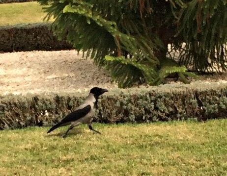 Haifa bird