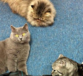 3 kitties