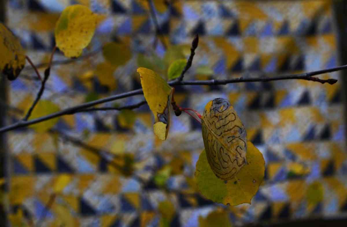 """""""Aspen Glow"""" –  Original Quilt Design"""