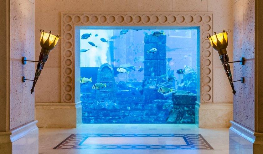 a view into the Atlantis aquarium Dubai