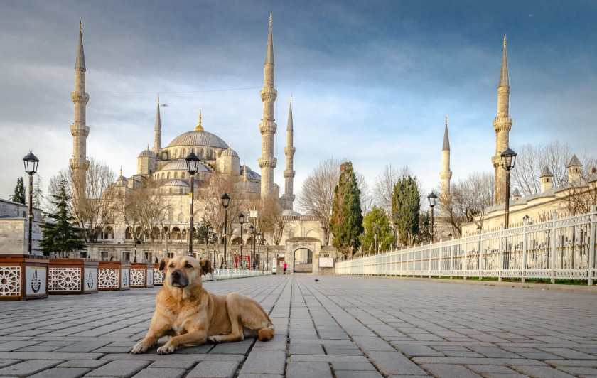 Dog in front of Blue Mosque #istanbul #bluemosque #dogs #istanbuldogs