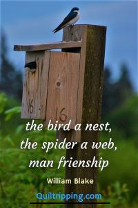 bird a nest, a spider a web, man friendship #quote, #inspirationalquote #treeswallow