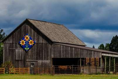 Sunflower block on the Harris Century Barn