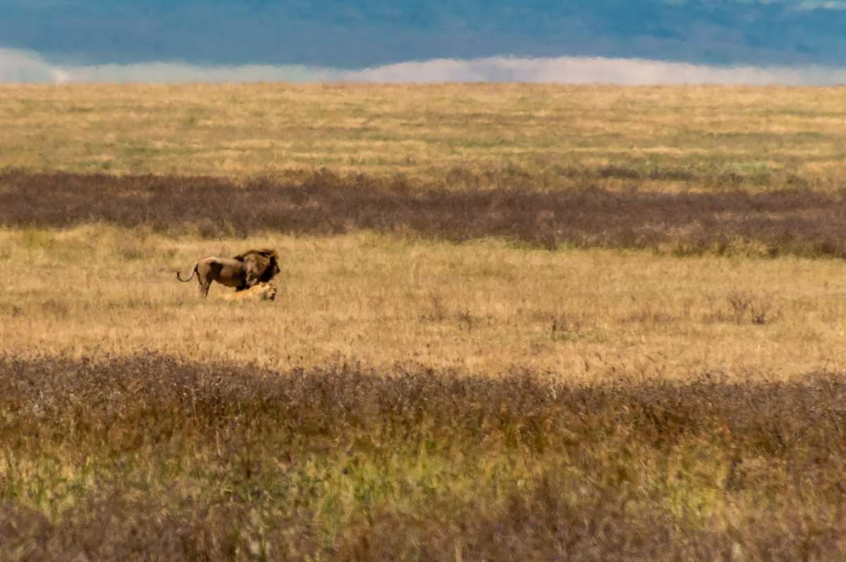 PhotoPOSTcard: No Privacy in the Savanna