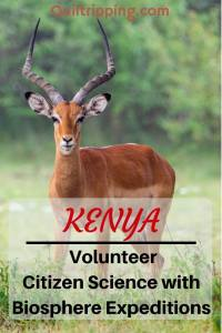 Discover how to be a volunteer citizen scientist with Biosphere Expeditions in #kenya #biosphereexpeditions #citizenscience #maasaimara